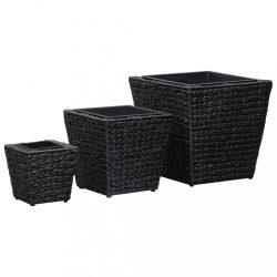 3 db fekete vízijácint kerti magaságyás