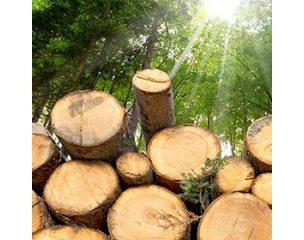 Erdészet és fakitermelés